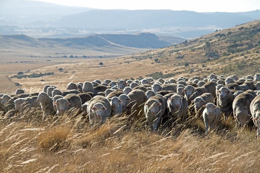 Wool photo